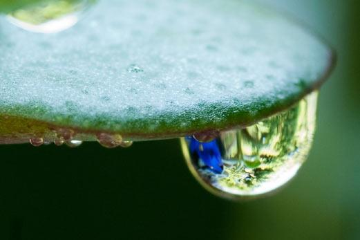 Use your camera's macro mode for great close-ups