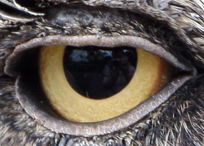 At ISO 120, the clarity is a bit better. Here is a close-up of the eye in the image below.